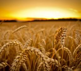 С начала маркетингового года экспорт зерна составил 13,5 млн тонн