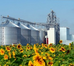 The export price of Ukrainian sunflower oil has reached a four-year high