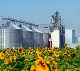 Украина экспортировала рекордные объёмы подсолнечного масла